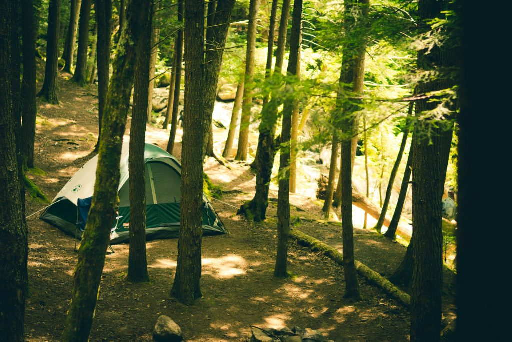 A green tent in pitched in the middle of a wooded area