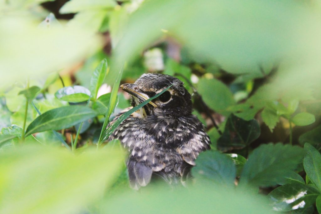 A small bird nestled in the green undergrowth