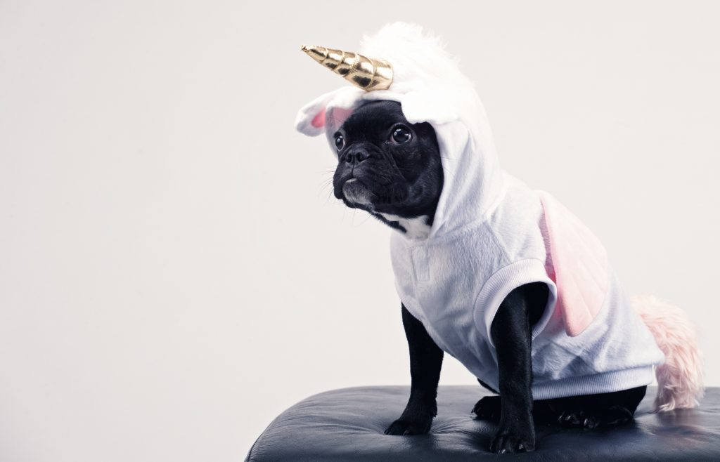 Dog wearing unicorn outfit