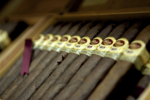 Cigars lined up in a humidor